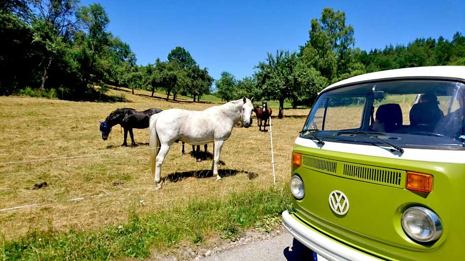 Ausflug ins Grüne zu Pferden und Picknick mit dem VW T2 Bulli