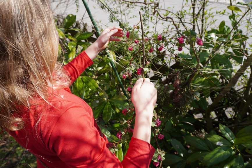 Anleitung Weben mit Zweigen, Blättern und Blumen