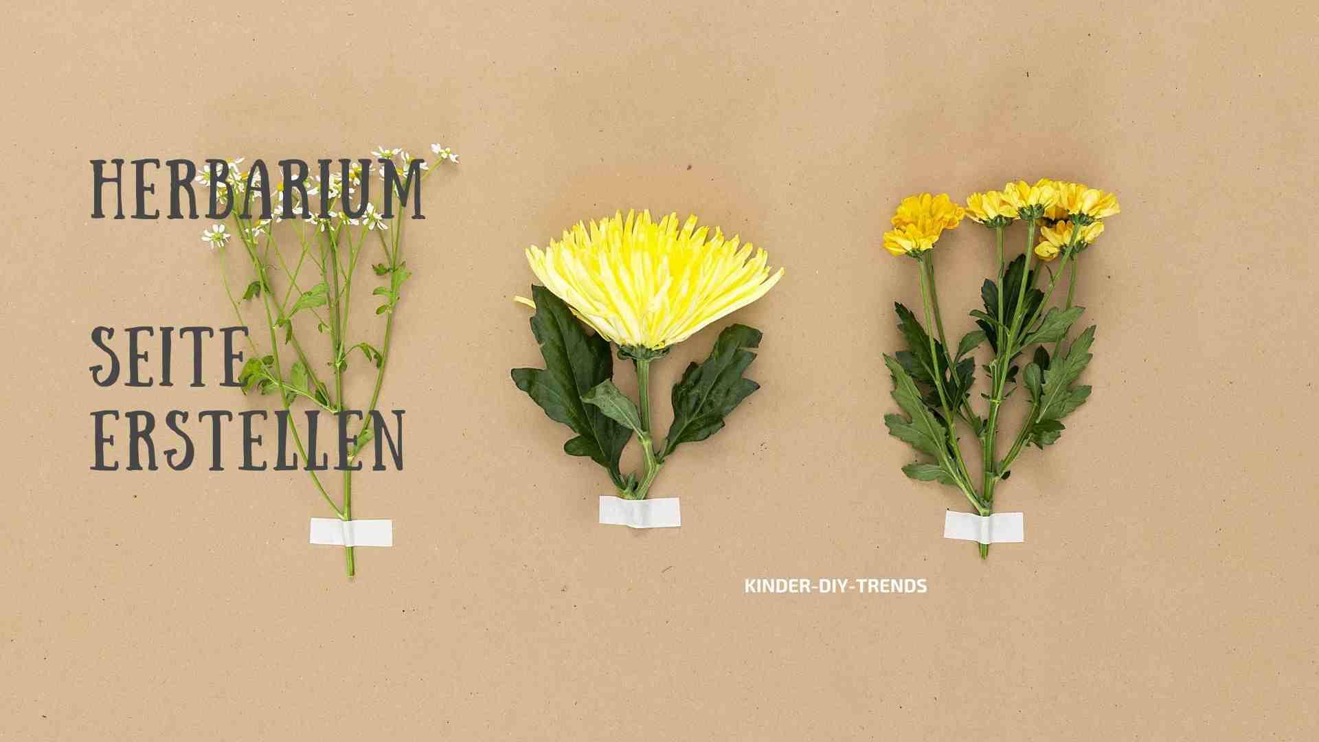Herbarium Seite anlegen. Anleitung.