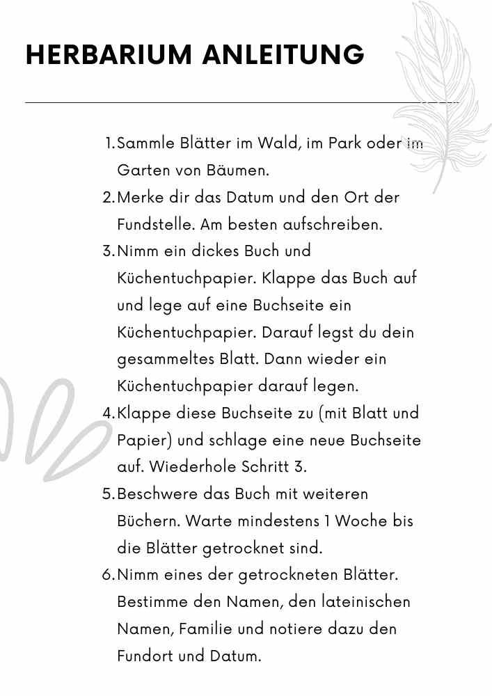 Herbarium Anleitung. Für Schule, Kindergarten, KITA, Vorschule oder zuhause.