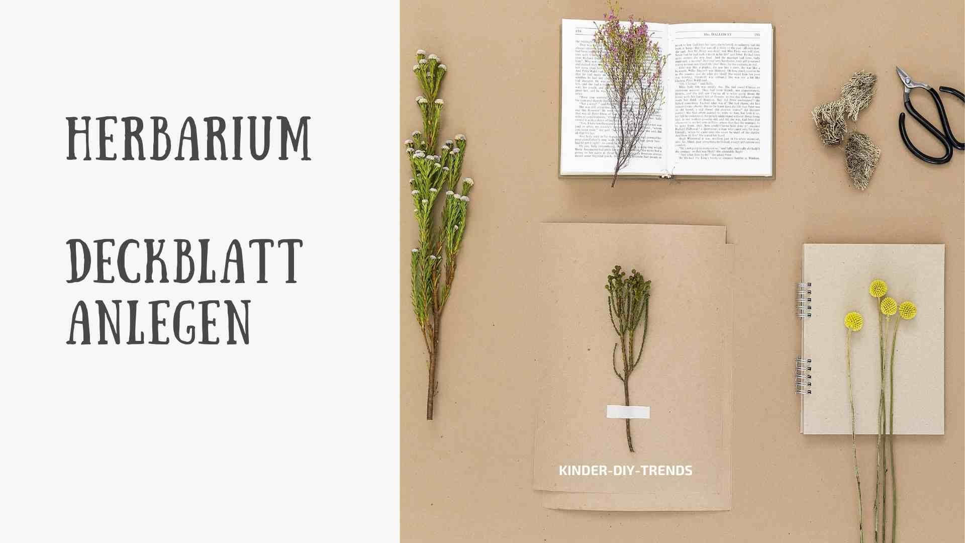 Herbarium Deckblatt anlegen. Schritt-für-Schritt Anleitung.