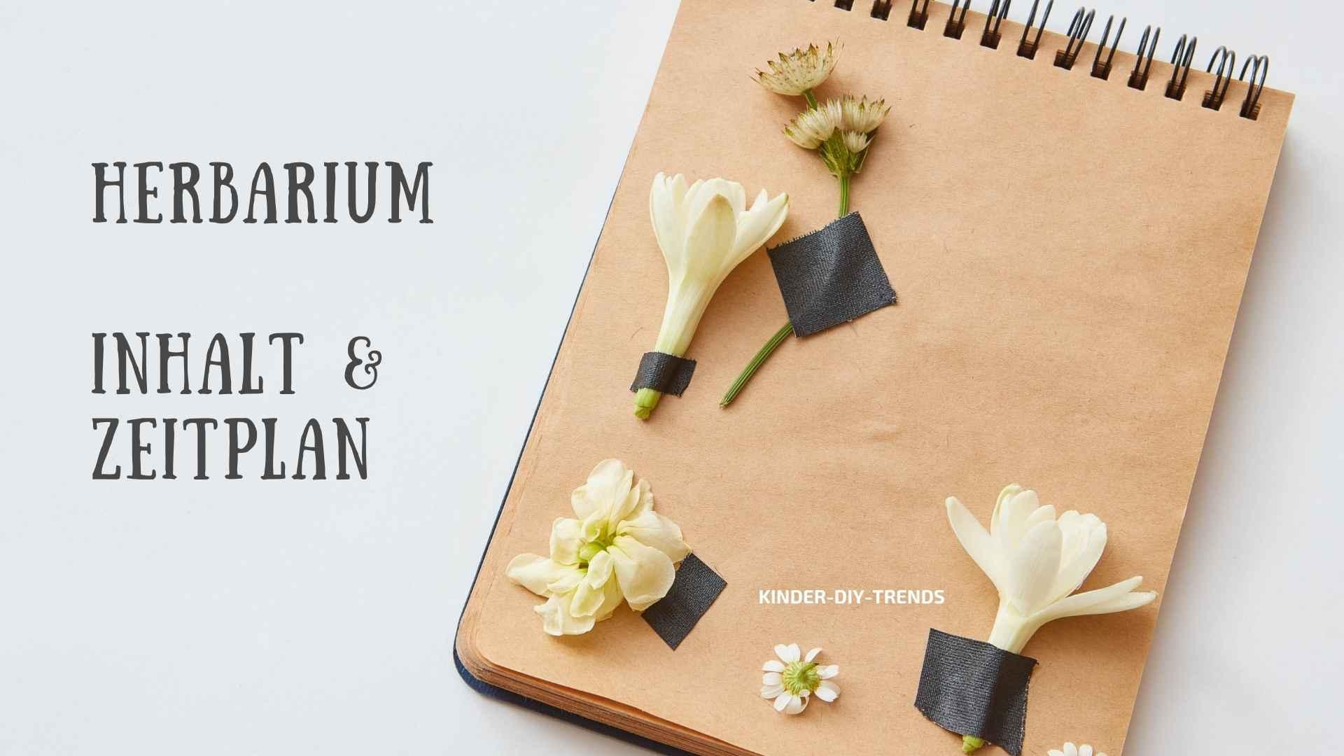 Was gehört in ein Herbarium? Inhalt & Zeitplan für die Erstellung eines Herbariums