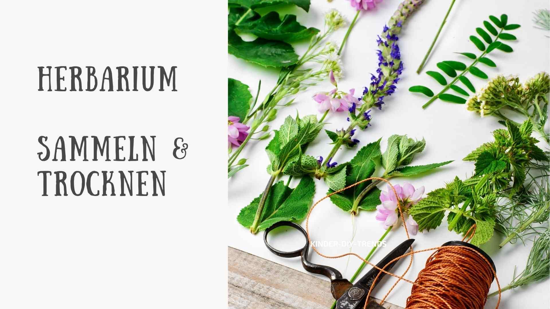 So erstellst du ein Herbarium: Blätter sammeln und Pressen. Anleitung.