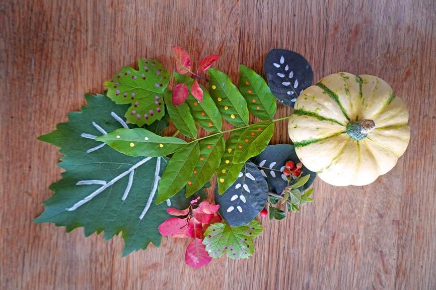 Naturmaterial Mandala aus Kürbis und Blättern mit Muster
