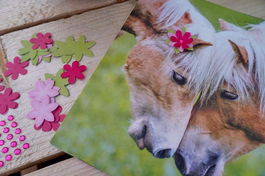Pferde Freunde Blütenbilder Coppenrath Spiegelburg