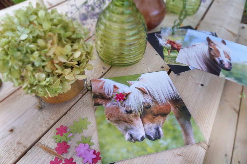 Pferde Freunde Blütenbilder Coppenrath Spiegelburg Inhalt