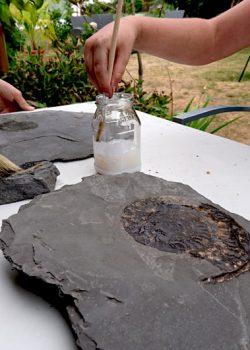Fossilien ausgraben im Steinbruch