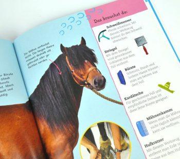 Wie pflege ich ein Pferd?