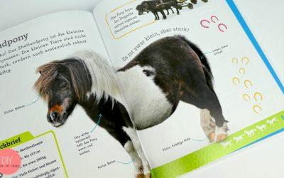 Steckbrief Pony, Kurzinformation