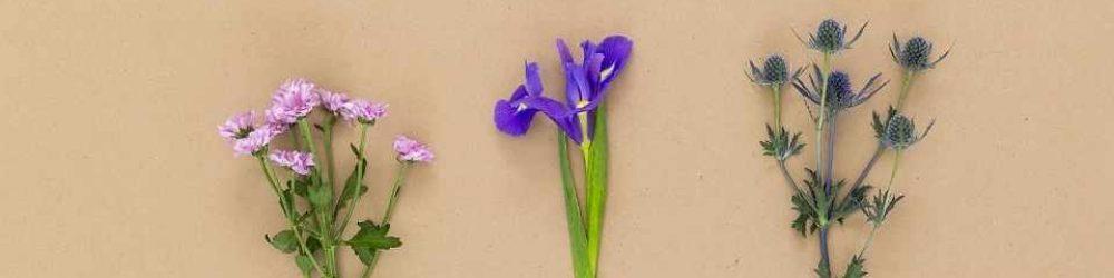 Herbarium Seite anlegen. Schritt-für-Schritt Anleitung.