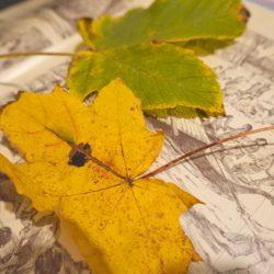 Blätter pressen mit einem Buch