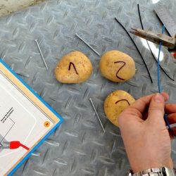 Kartoffel Batterie bauen