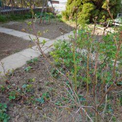 Blick ins Beet im Garten - was müssen wir im Frühling machen?